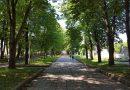 Šiauliuose vykdant projektus bus kertami seni ir sodinami nauji medžiai