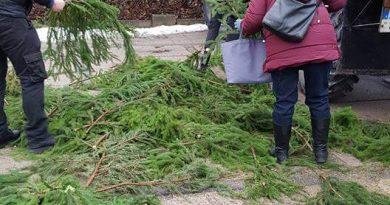 Nemokamos eglių šakos – kalėdinė dovana šalies gyventojams